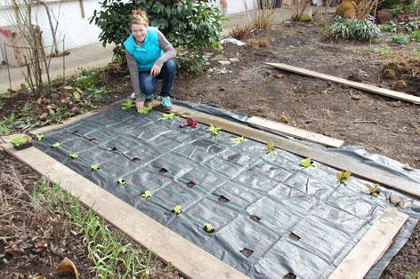 salat pflanzen k eine wissenschaft orf tirol fernsehen. Black Bedroom Furniture Sets. Home Design Ideas